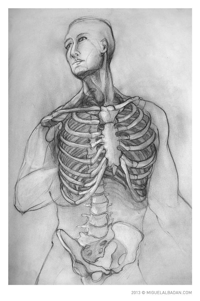 Estudios de Anatomía Humana